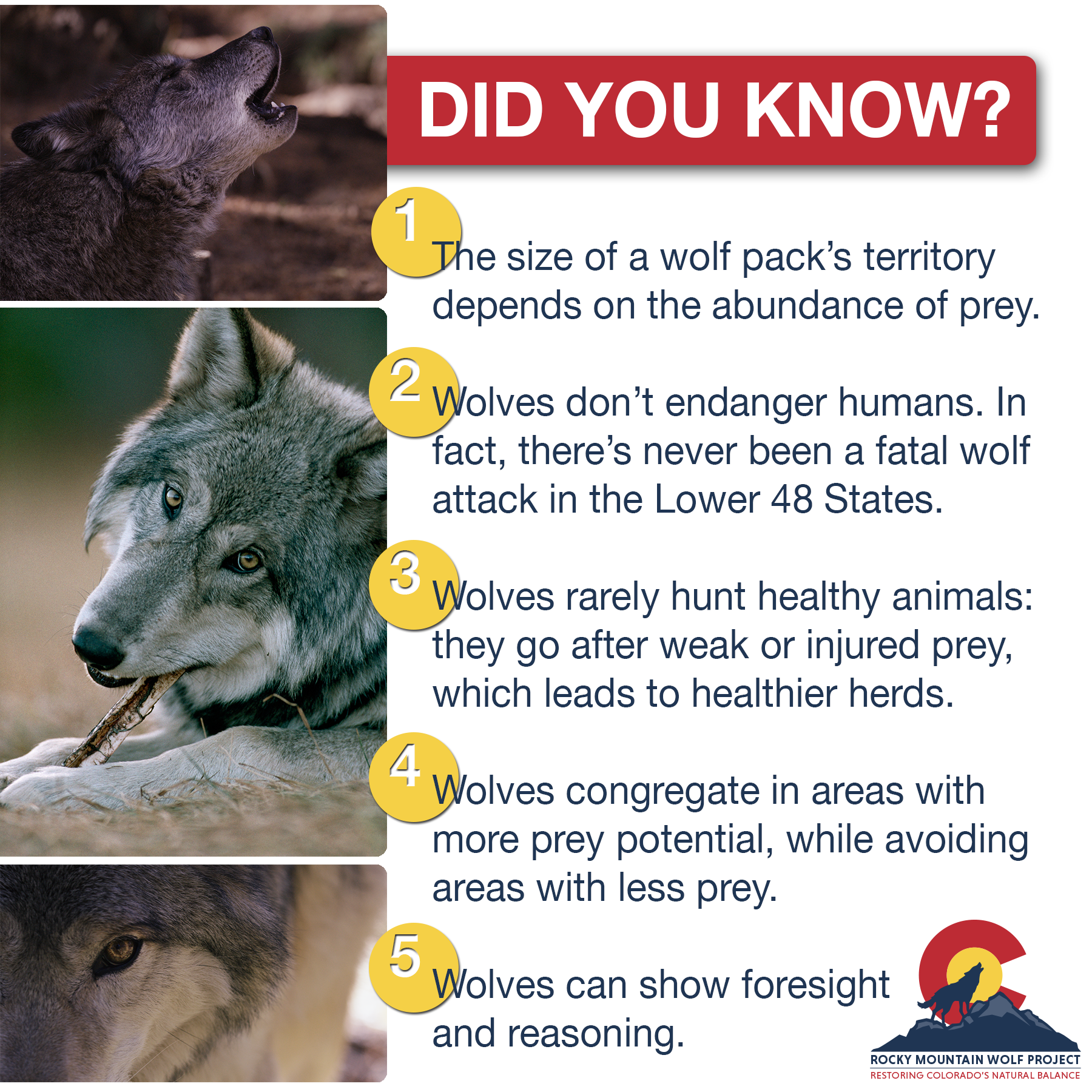 RMWP_Wolves-5-Facts.png